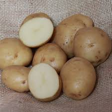 Early Seed Potatoes