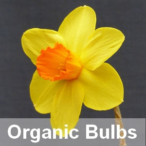 Organic Bulbs