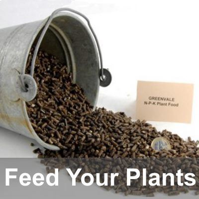 Feed Your Plants