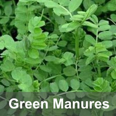 Green Manures & Forage Crops