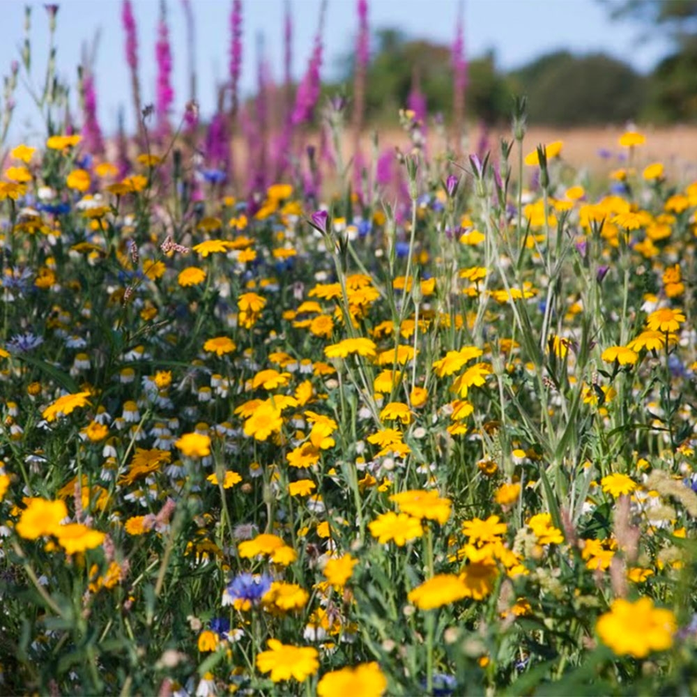 Flower meadow seed mixes