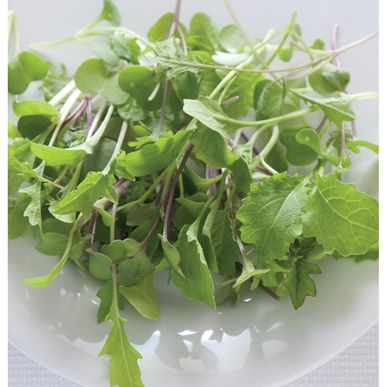 Organic Microgreen Seeds