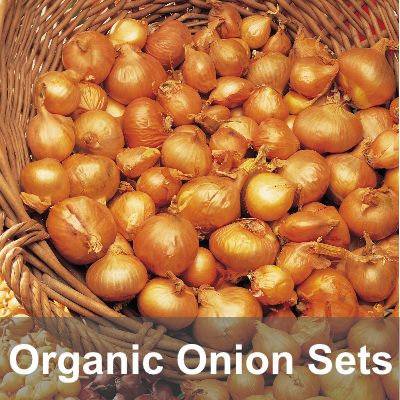 Onion Sets & Shallots