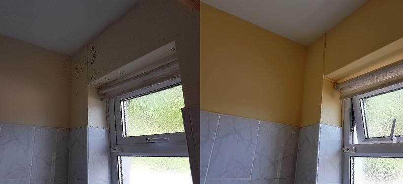 Non Toxic Emulsion Paint