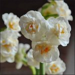 Top Ten Organic Bulbs