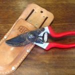 Cleaning and Sharpening Pruning Tools