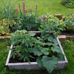 How does your garden grow - featured March garden
