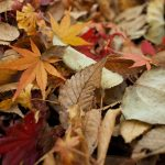 5 things to do in Autumn to Prepare your Garden for Winter and Spring