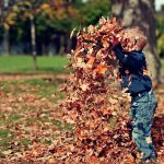 Using Leafmould as a Soil Conditioner