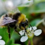 The Dangers Neonicotinoid Insecticides hold for our bees and other wildlife