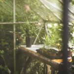 Cleaning your greenhouse or polytunnel: equipment and methods