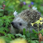 Attracting Wildlife in the Garden