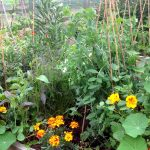 How does your Garden Grow - Featured June Winner