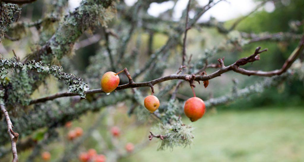 September Seasonal Table:  Apples