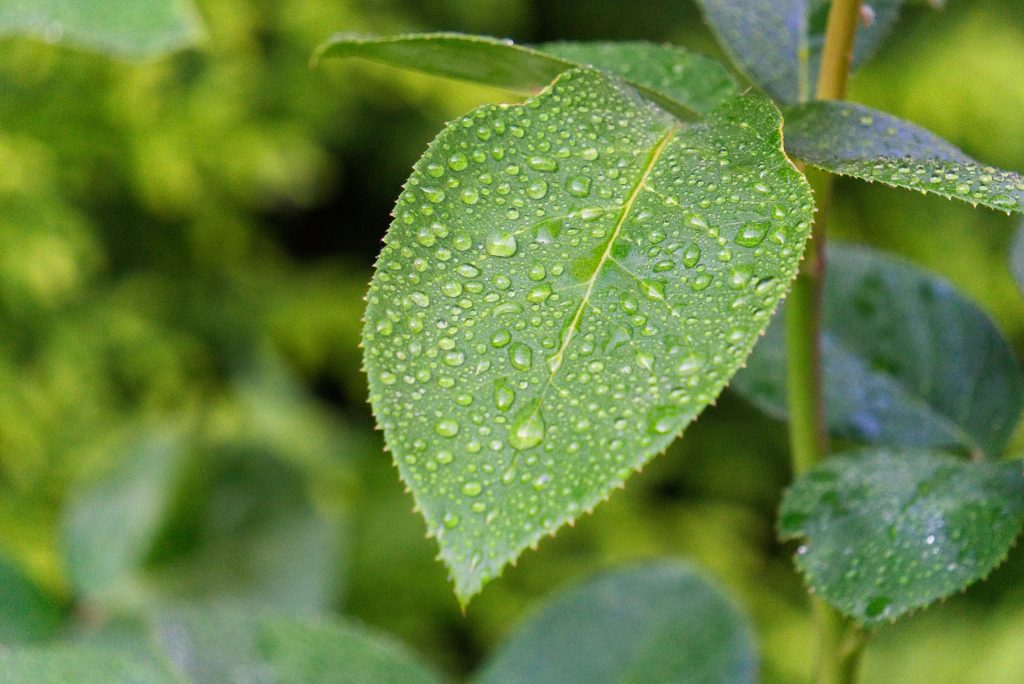 Foliar and Liquid Feeding for optimum crop growth