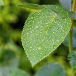 Foliar and Liquid Feeding for optimum crop growth