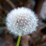 Managing Weeds Organically