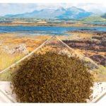 seaweed_meal1