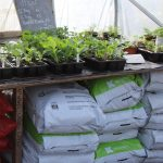 Klasmann organic compost for reliable results
