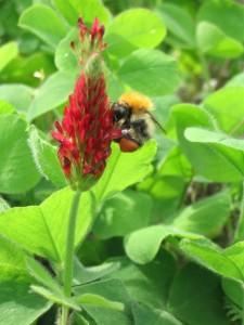 asttracting wildlife to yoiur gardn, attracting bees