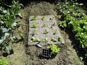 Wool mulch, organic mulch
