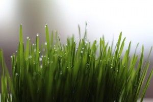 Wheatgrass, Getting healthier in 2017