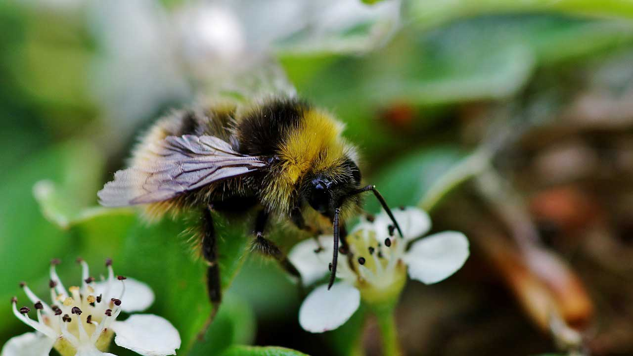 Bees in danger due to insecticides
