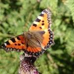 butterfly-2127189__340