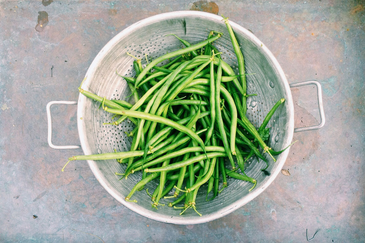 fermenting and preserving green beans