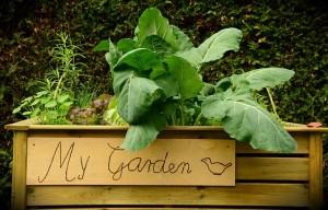 garden-1427541__340