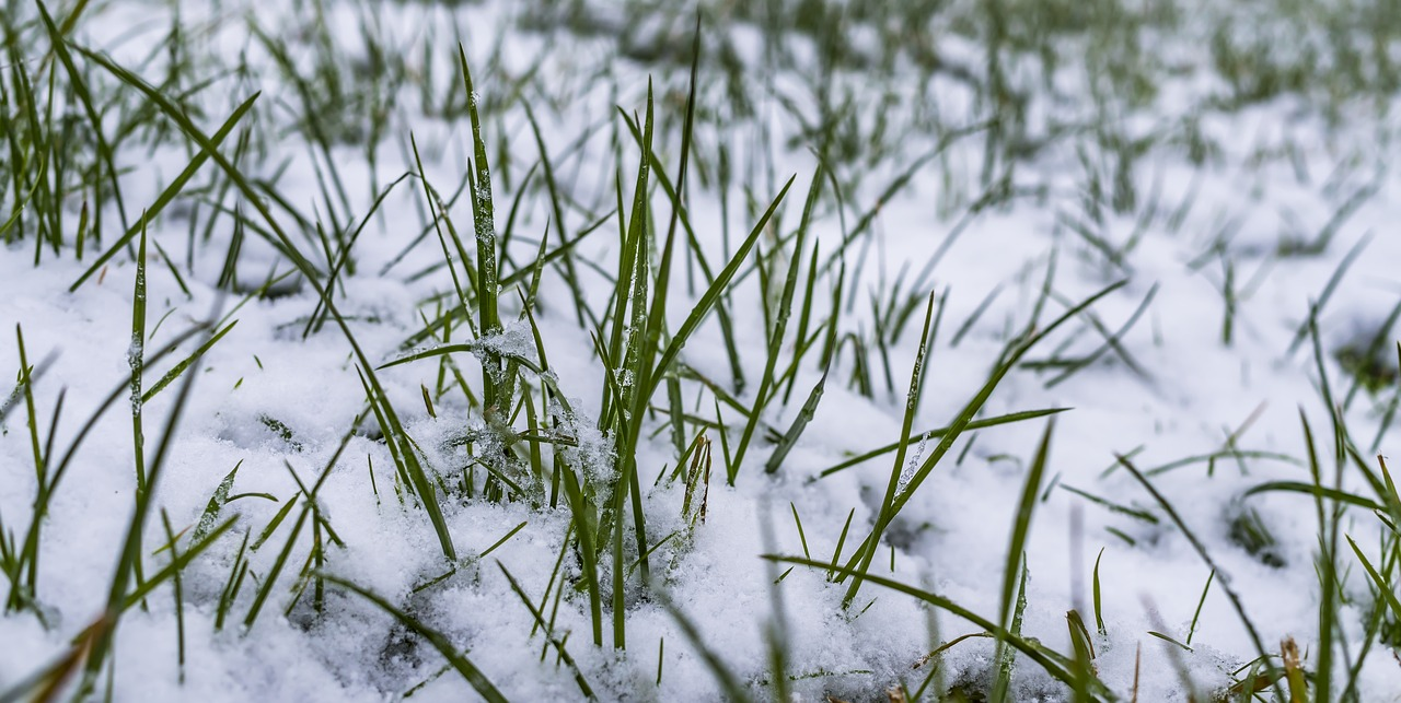 frosty weather delaying potato planting