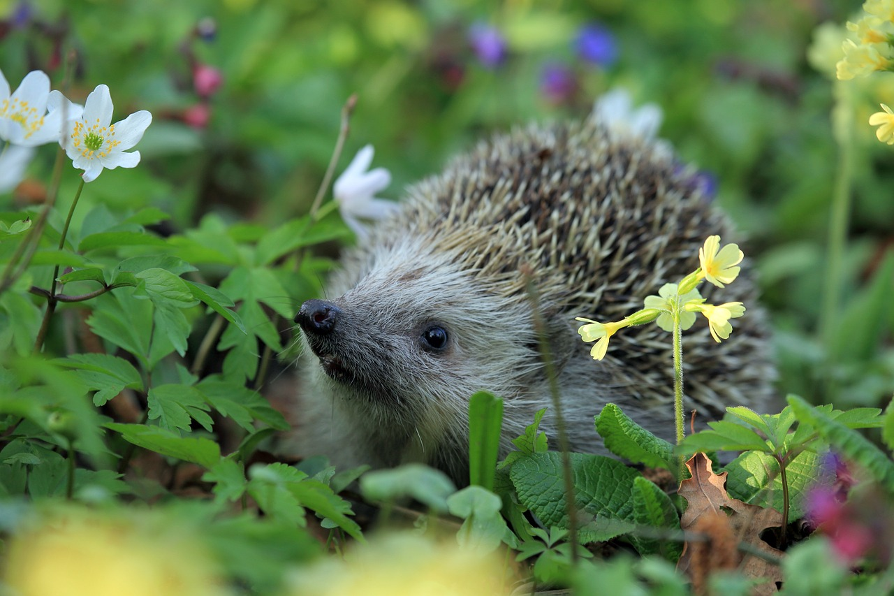 how to attract wildlife in your garden