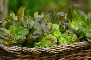 salad-1516694_960_720