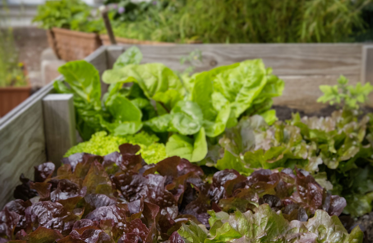 How to make and keep raised beds
